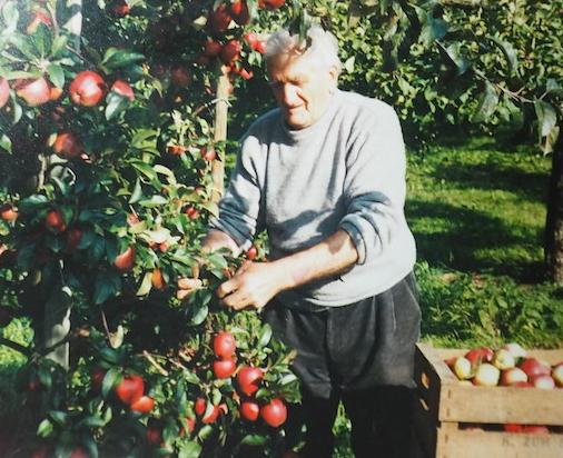 Mein Uropa bei der Apfelernte
